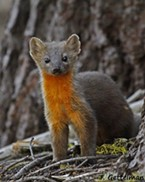 Cute and endangered?