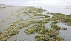 Pass the Eelgrass