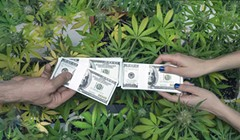 Humboldt County's 'Cannabis Planning Program' Lacks Fiscal Transparency, Grand Jury Reports