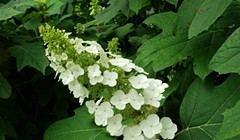 Humboldt Botanical Garden Presents Online Plant Sale