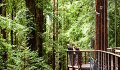 Redwood Sky Walk Opening Delayed