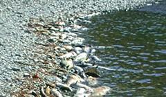 Murky Waters