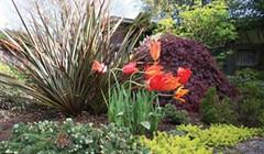 KonMari in the Garden