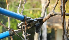 Fruit Tree Pruning 101