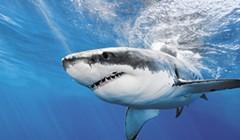 Sharktober, Part Four