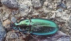 HumBug: Beetles and Gadgets