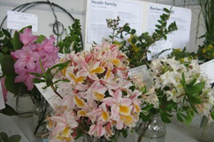 California Native Plant Society Wildflower Show