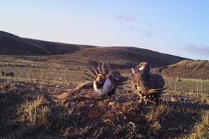 Planning Future Restoration for Long-Term Survival of Greater Sage-Grouse