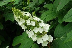 Humboldt Botanical Garden Plant Sale
