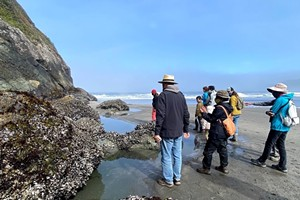 Tidepooling for All Abilities