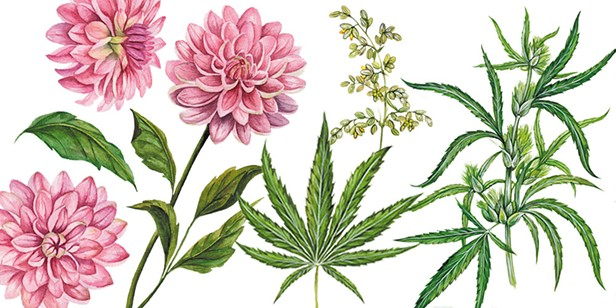 Medicine and Flowers
