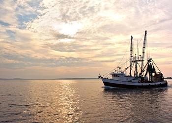 Huffman Gets Bleak Input on Fisheries