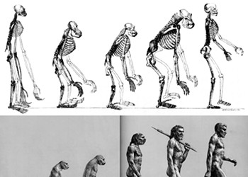 Evolution Isn't Progress!