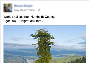 Buzzkill: That's Not the World's Tallest Tree