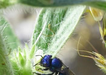 HumBug: Oregon Butterflies and Wasps