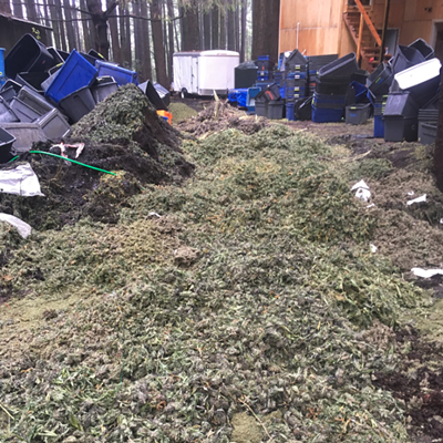 Wilder Ridge Marijuana Bust