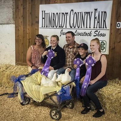 Fair Livestock 2017