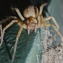 HumBug: Spiders in the House