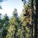 Eight Tree Myths