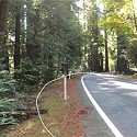 Roads and Redwoods