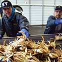 Crab Fishermen in West Coast Ports Pull Pots in Solidarity with Humboldt