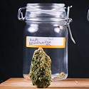 New Cannabis Strains for Today's Stress
