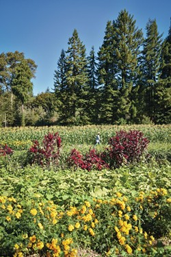 DREW HYLAND - Pepperwood's Flood Plain Produce
