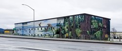 "PHOTO BY GABRIELLE GOPINATH - Lucas Thornton's roadside mural ""Marvelous Mural of Marbled Murrelets."""