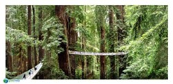 rtistic renderings of Redwood Canopy Walk courtesy of Greenway Partners.