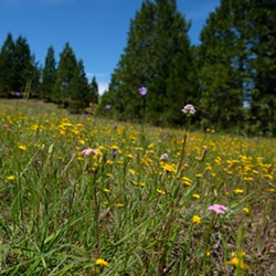 A field of wildflowers at Fool's Farm - Uploaded by Sanctuary Forest