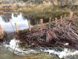 An example of a Beaver Dam Analogue structure. - Uploaded by Sanctuary Forest