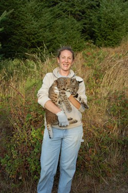 Dr. Wengert with one of the bobcats from her dissertation research on bobcat-fisher interactions at the Hoopa Valley Reservation. Photo by Mourad Gabriel