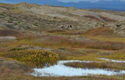 Ma-le'l Dunes Cooperative Management Area - Uploaded by Suzie Fortner 1