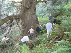 Volunteers remove invasive ivy from Pilot Point - Uploaded by TCLTAmy