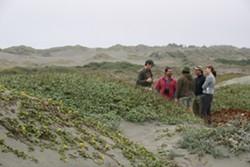 dune_landscape.jpg
