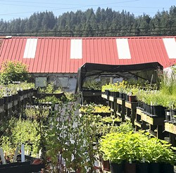 CNPS Nursery, Freshwater Farms Reserve, Eureka, Ca - Uploaded by Sharon King