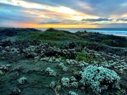 PHOTO BY JENNIFER SAVAGE - Dune sunset
