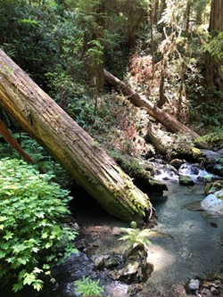 Devil's Creek tributary to Redwood Creek - Uploaded by TRIB Research