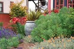 PHOTO BY GENEVIEVE SCHMIDT - A Tuscan style adds color to the Eureka garden of Lynda Pozel.
