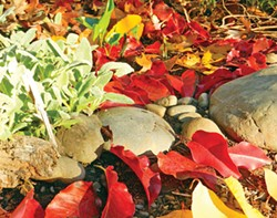 HEATHER JO FLORES - Natural mulch among the rocks.
