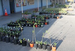 2015_plant_sale.jpg