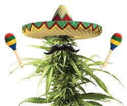 OK, this marijuana is racist.
