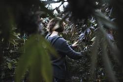 PHOTO BY TALIA HERMAN - A marijuana farmer in her garden.