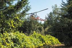 PHOTO BY MARK MCKENNA - A Cal Fire helicopter lands at an old nursery on Green Diamond property near the crash site of a Cal-Ore Life Flight plane on Friday morning.