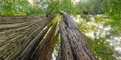 4543bb3a_tree_swirl_688_by_344.jpg