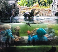 COURTESY OF THE ARTIST - Dana Utman's shot of the Sequoia Park Zoo's river otter habitat between 10 and 11 a.m.