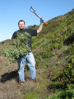 Restoration volunteer John Mitcha shows off a yellow bush lupine he bashed at the 2011 event.