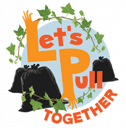 ae0a908d_lets-pull-together.png
