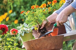 SHUTTERSTOCK - Proper planning leads to a better garden.