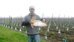 """Owlwing"" = Xeronimo Castenada displays a barn owl's wing, with a Napa County vineyard in the background."